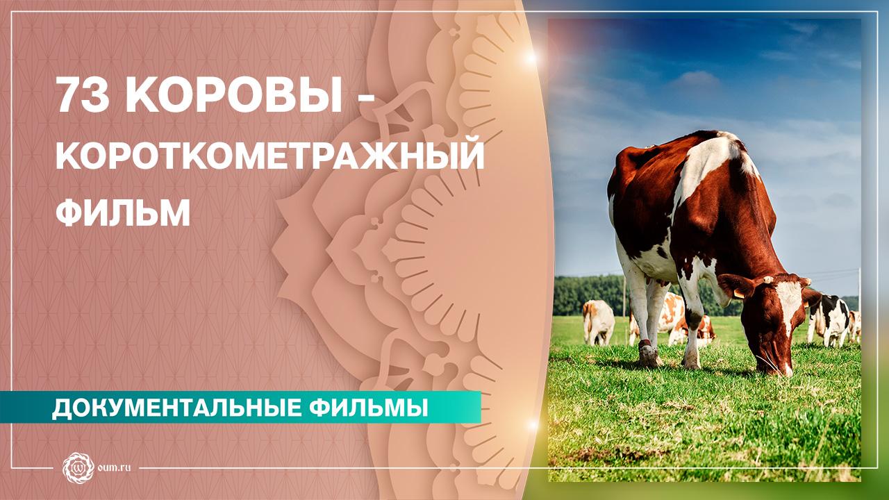 73 коровы - Короткометражный фильм (2018)